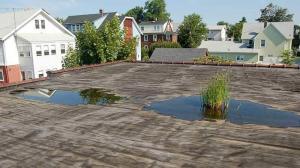 Flat Roof drain